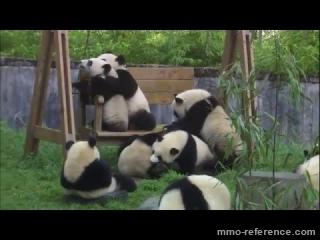 Vidéo League of Angels 2 - Sauvez les pandas !